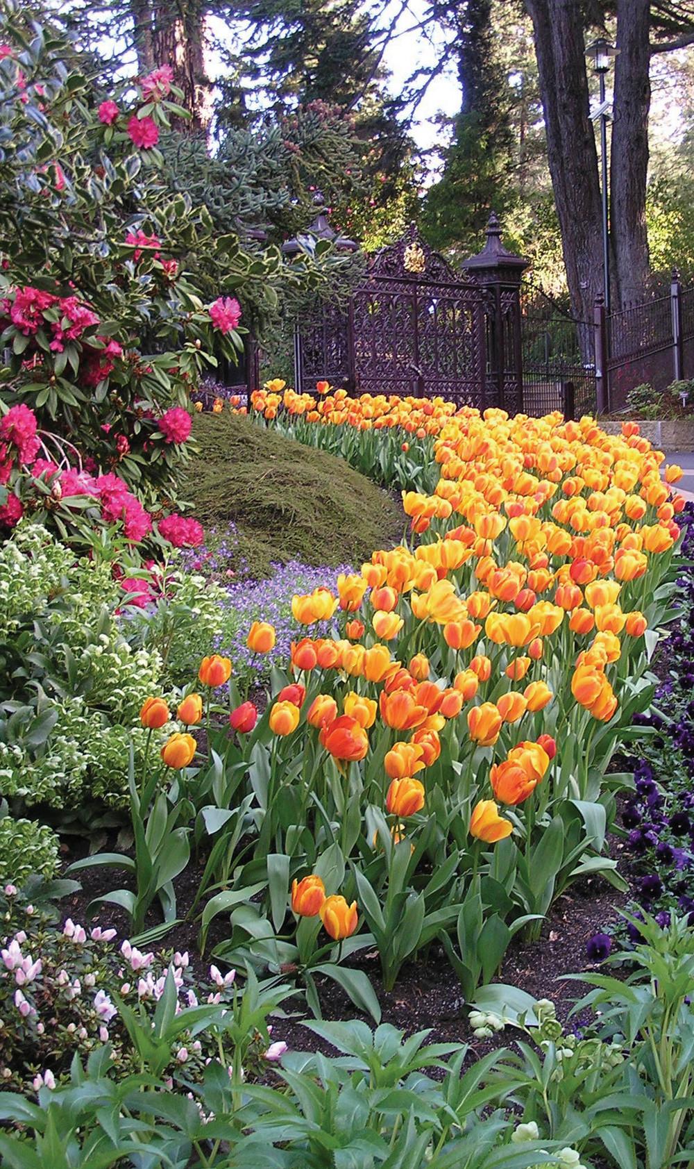 Botanic Gardens Tulips.jpg