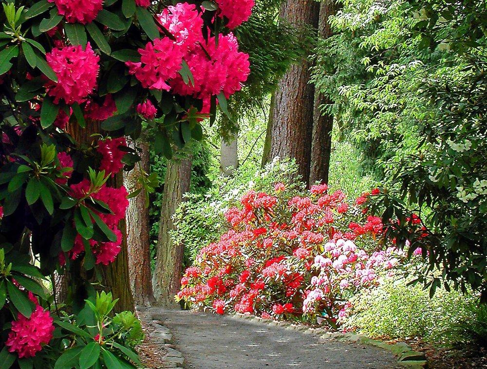 Rhodo garden.jpg