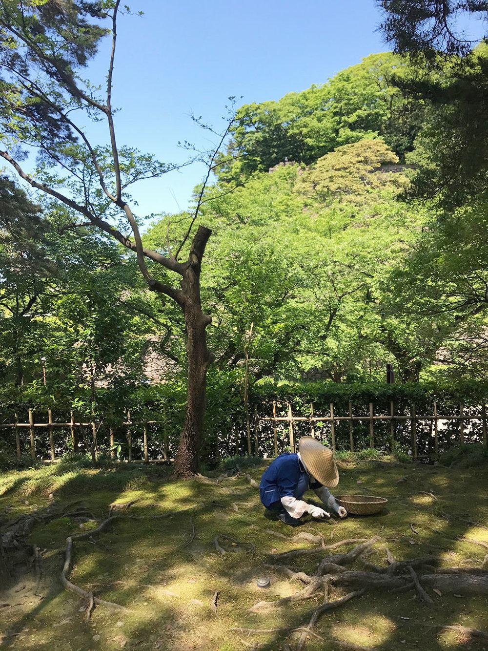 Japenese Gardener