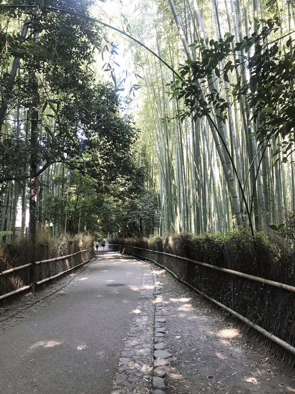 Bamboo Grove early in the morning