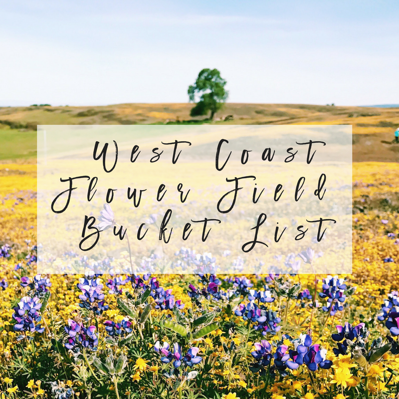 west coast flower fields