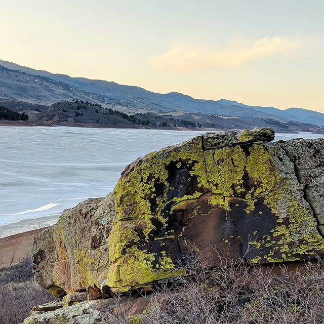 Colors at Horsetooth Res were poppin the other night. I'm lichen it. #neongreen #lichen