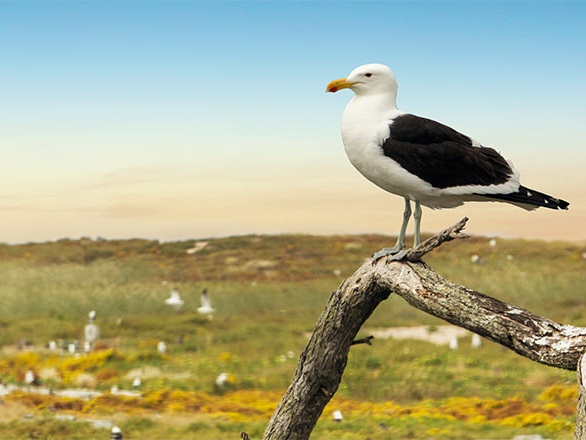 Photo credit: Robben Island