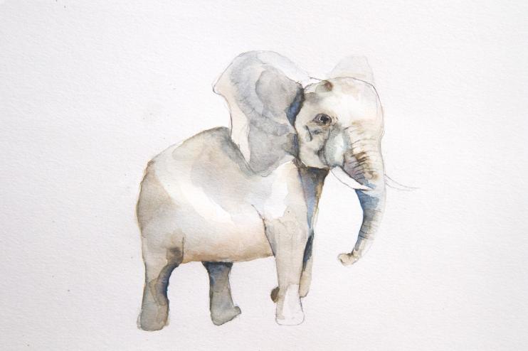 30daysofillustration_elephant