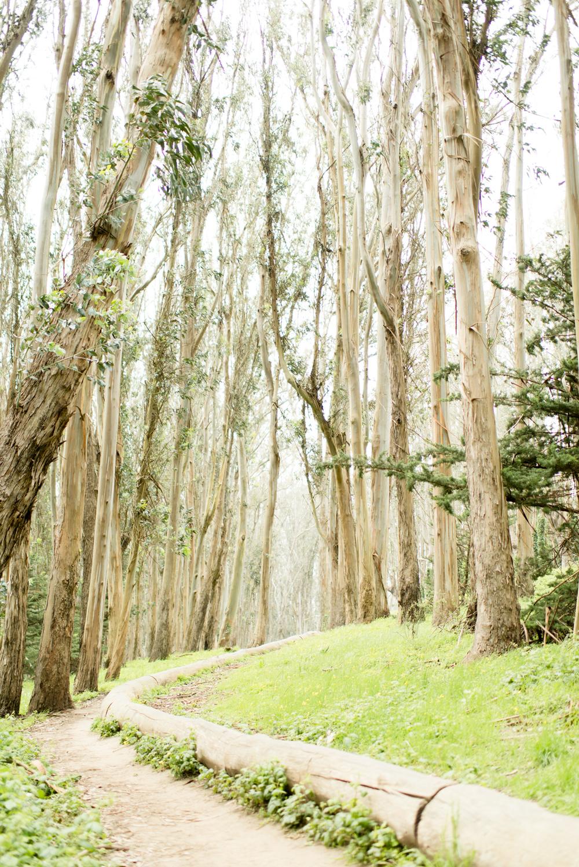 Presidio Pathway