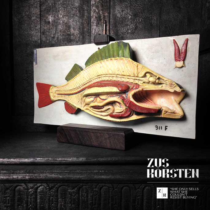 Fish Anatomy Model — ZUS KORSTEN