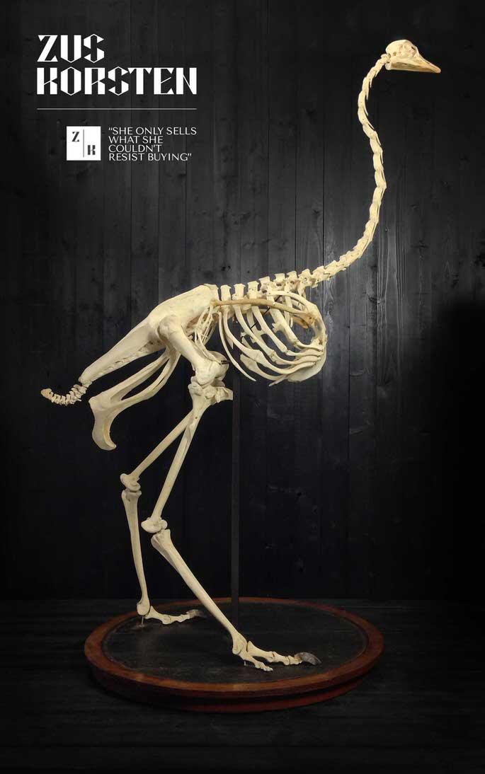 Ostrich-skeleton.jpg