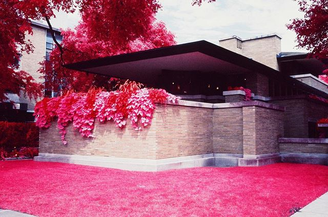 Chicago's Robie House, Frank Lloyd Wright's non-aqueous, non-museum masterpiece. Now available in red. . #RobieHouse #FrankLloydWright #WrightSites #Architecture #Chicago #SouthSide #HydePark #WindyCity . #Aerochrome #Aerochrome400 #Kodak #KodakAerochrome #EIR #KodakEIR #IR #Infrared #ColorInfrared #ExpiredFilm #Film #FilmIsNotDead #ShootFilm #35mm #FPP #FilmPhotographyProject #FPPInfrachrome #Infrachrome #ColorInfraredFilm #InfraredFilm