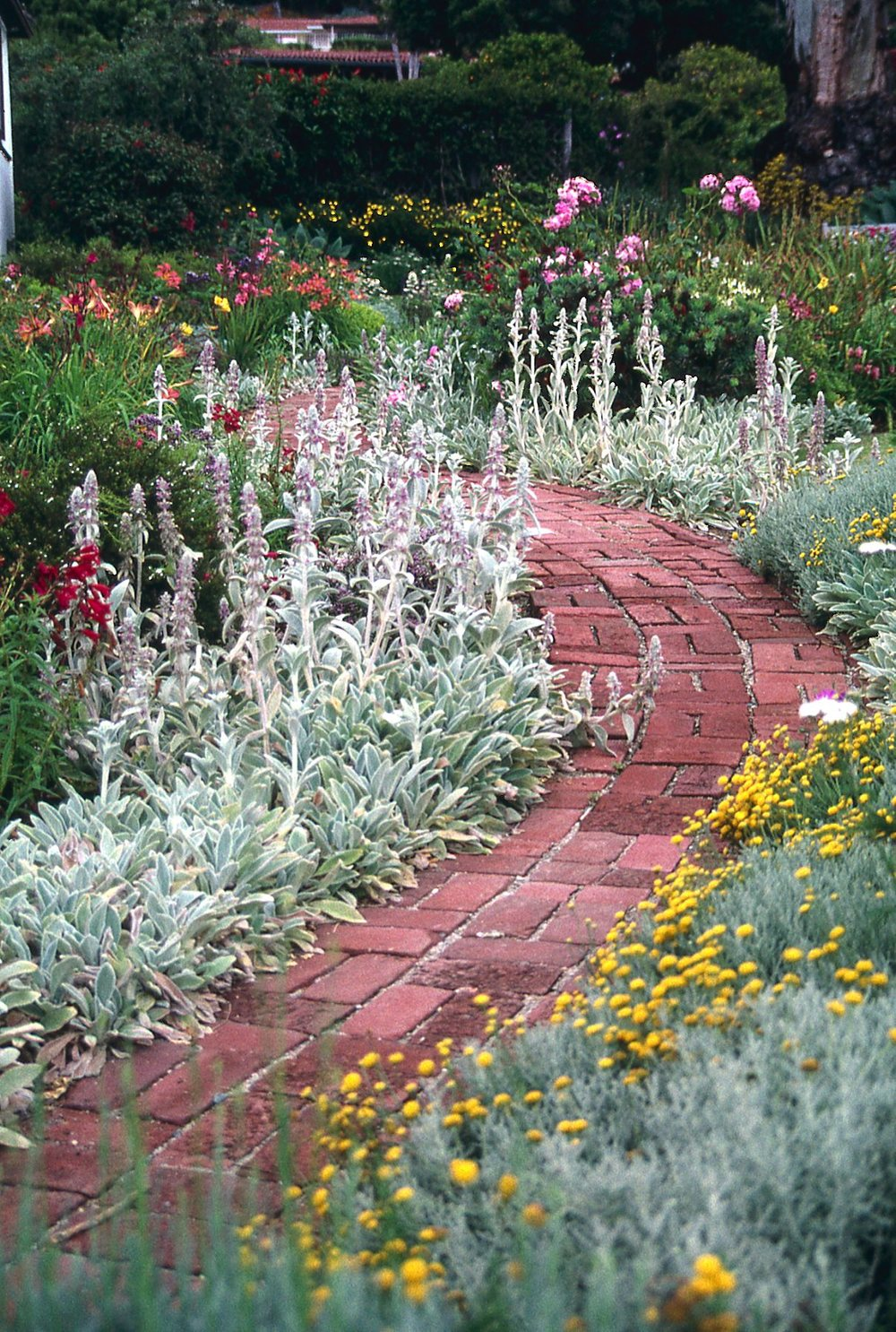 brick walkway with low water flowers