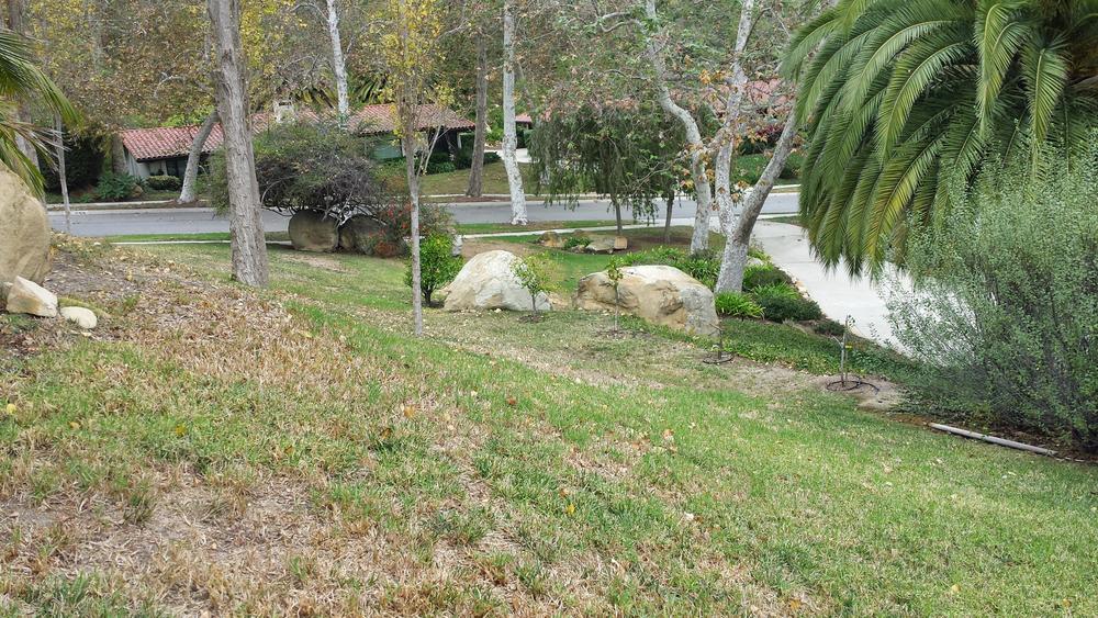 Old M Backyard B.jpg