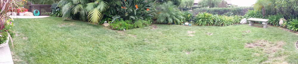 Panoramic view of small backyard lawn area.