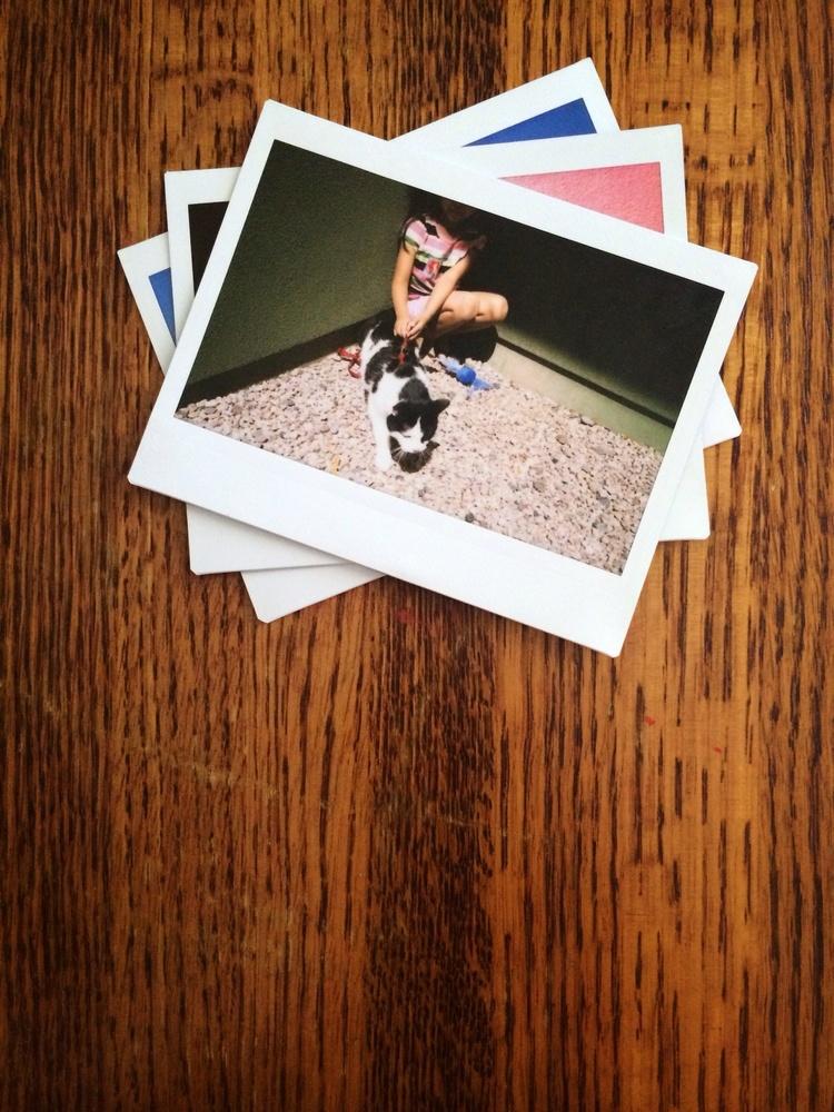 PetSmart — Branden Harvey - World Traveling Storyteller
