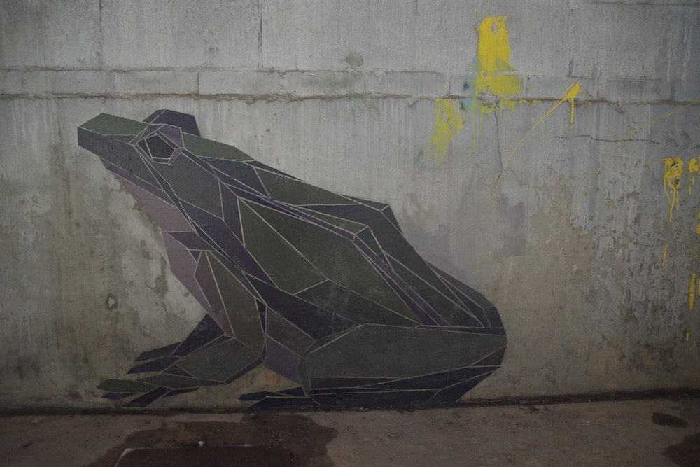 frog+copy.jpeg