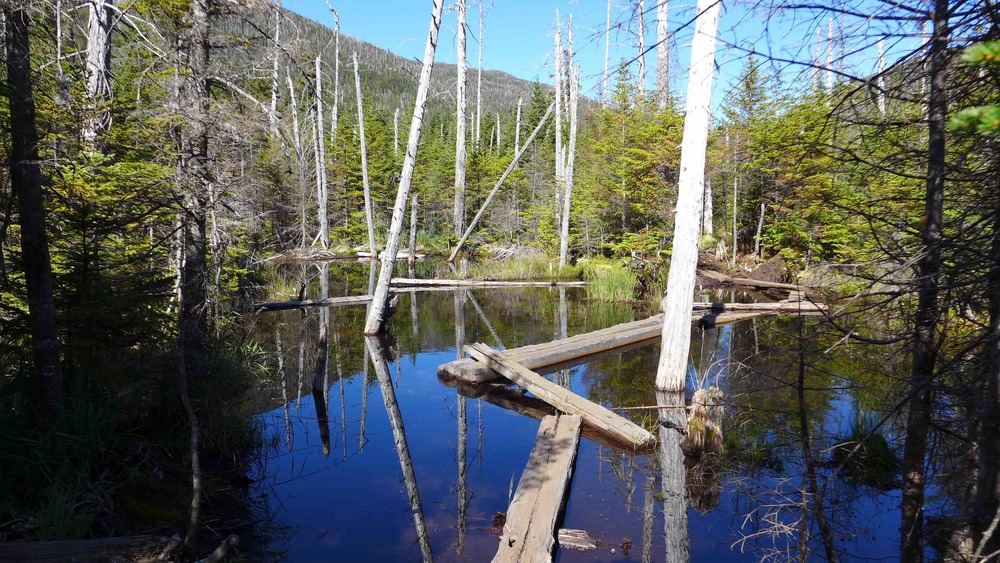 Wood planks trail from Mount Marcy & Lake Tear of the Clouds, passing Lake Arnold on the way back to Adirondack Loj @ateliermileaway.com