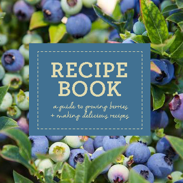 BB Recipe Book_Page_1.png