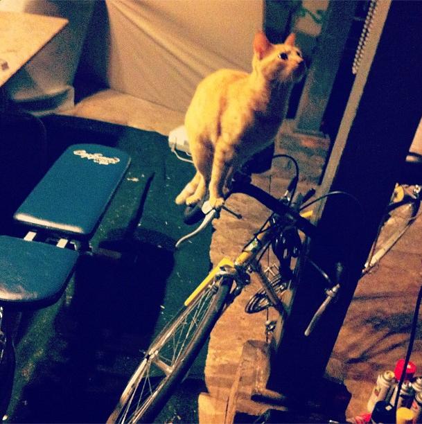 bikepretty, bike pretty, cycle style, cycle chic, bike model, bike fashion, cute bike, instagram, cat, kitty, cat on a bike, cat riding bike, bike kitty
