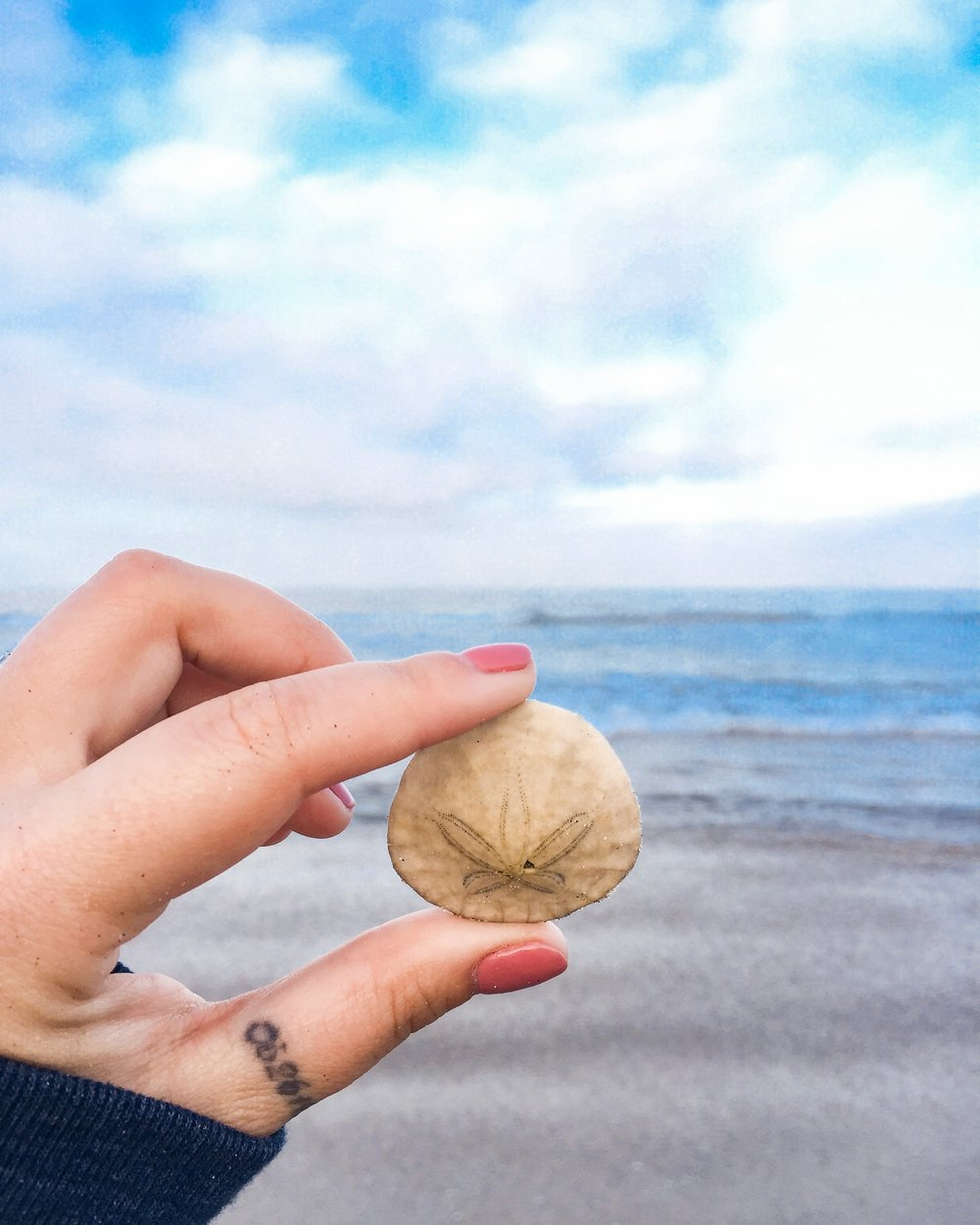 Mission Beach - sand dollar