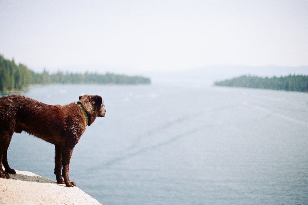 A cute pup overlooking the bay from the top of Fennet Island