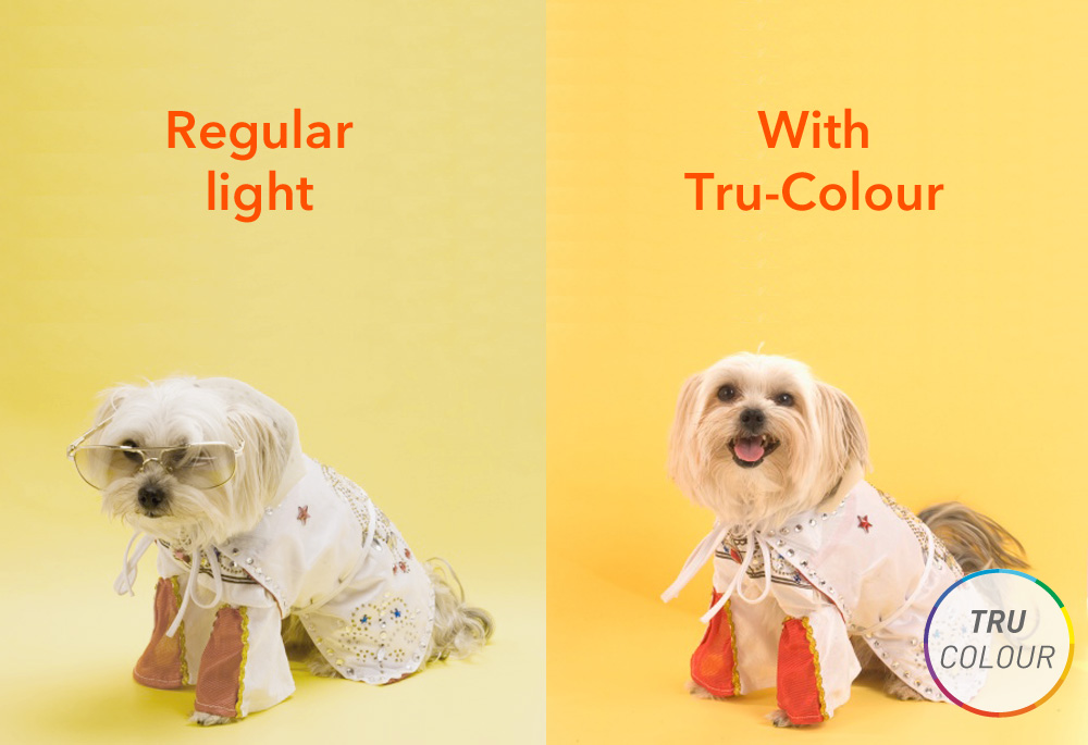 Tru-colour-dog.jpg
