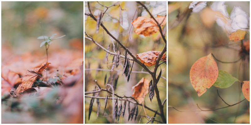 BlogPretty_Autumn_Leaves_Poetry_RichmondVA_PattengalePhotography_1400.jpg