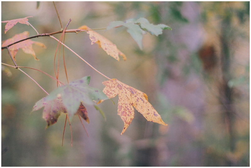 BlogPretty_Autumn_Leaves_Poetry_RichmondVA_PattengalePhotography_1403.jpg