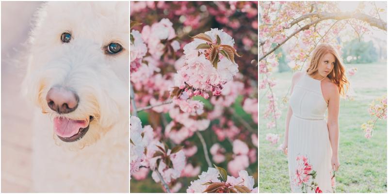 PattengalePhotography_WashingtonDC_LogansCircle_BlagdenAlley_CherryBlossoms_FDR_EngagementSession_Couple_Goldendoodle_Lisa&Jimbo_2290.jpg