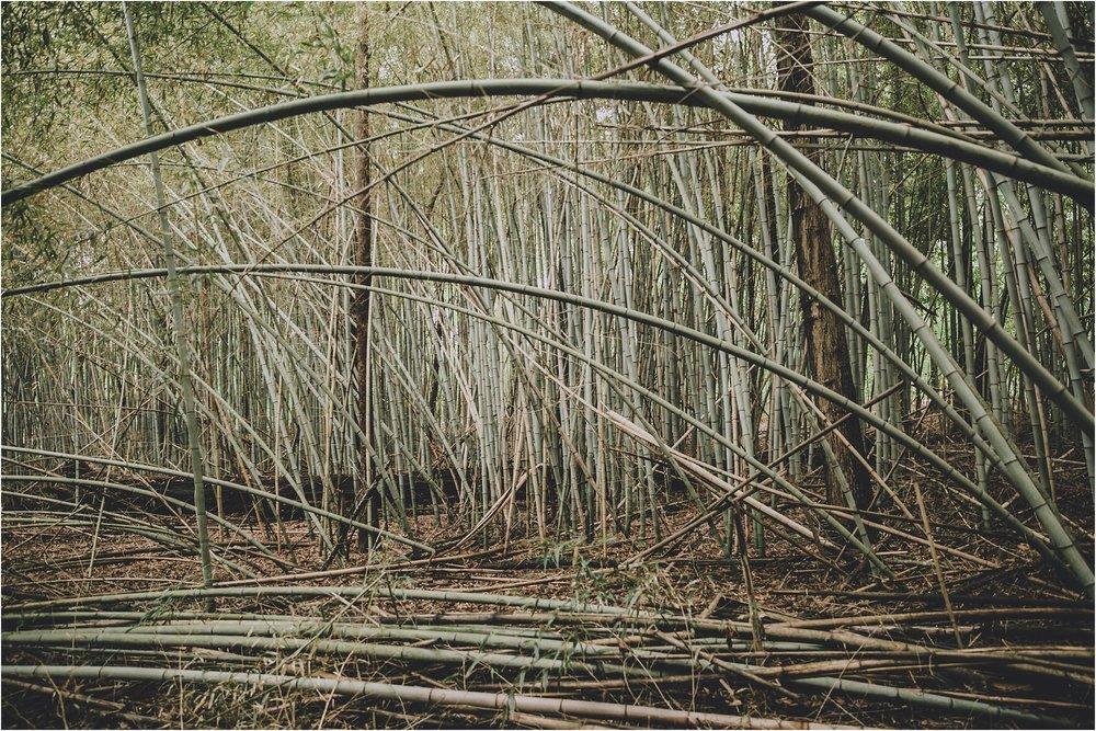 PattengalePhotography_Hannah&Thomas_Richmond_Boho_Engagement_Adventure_Bamboo_elopement_Photographer_Hippie_Wedding_Bohemian_0079.jpg