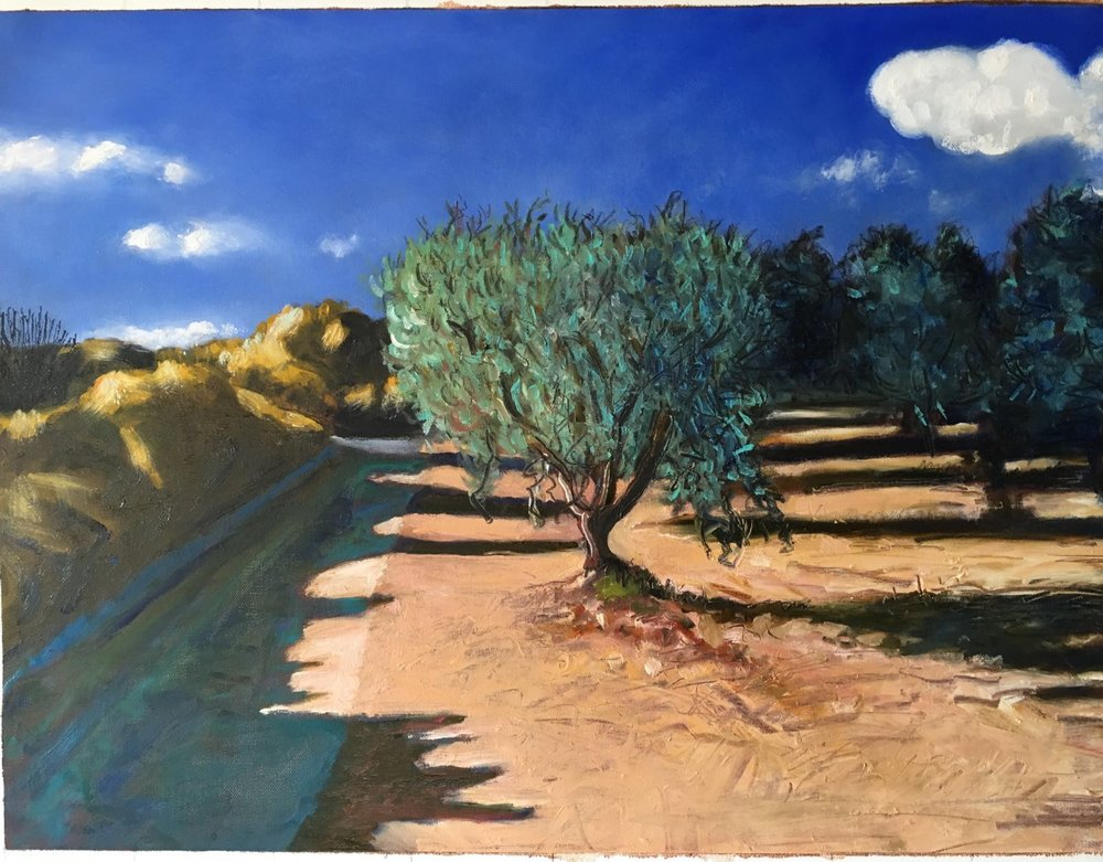 Olive Tree at Four Winds
