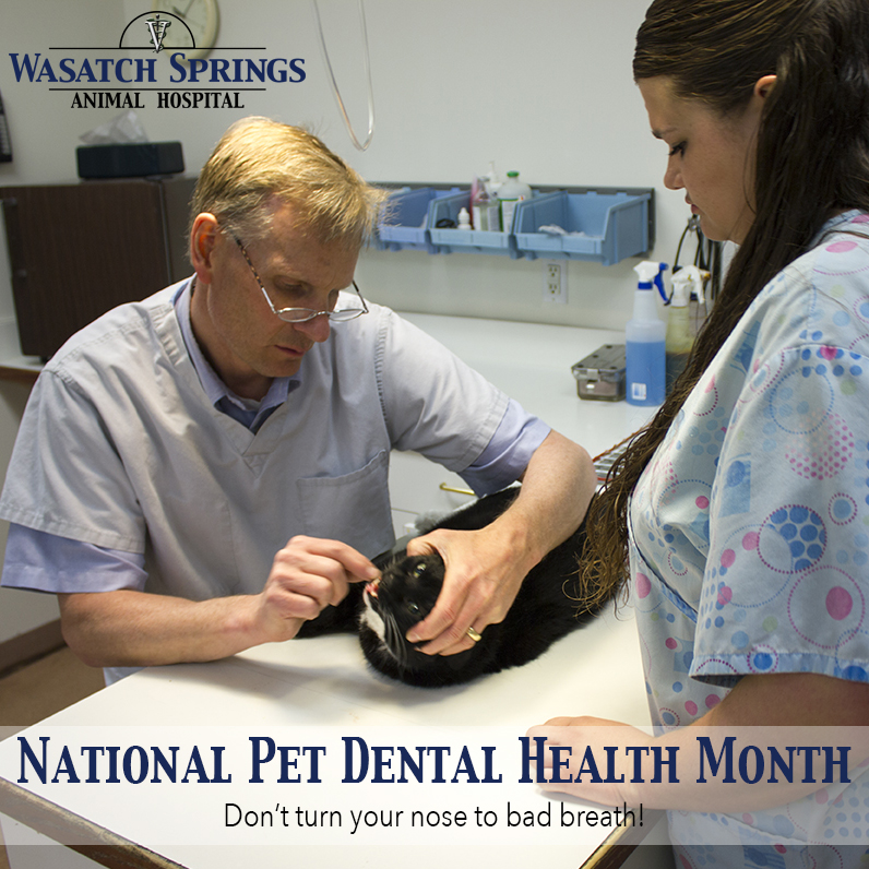 Wasatch Springs Animal Hospital Pet Dental Health