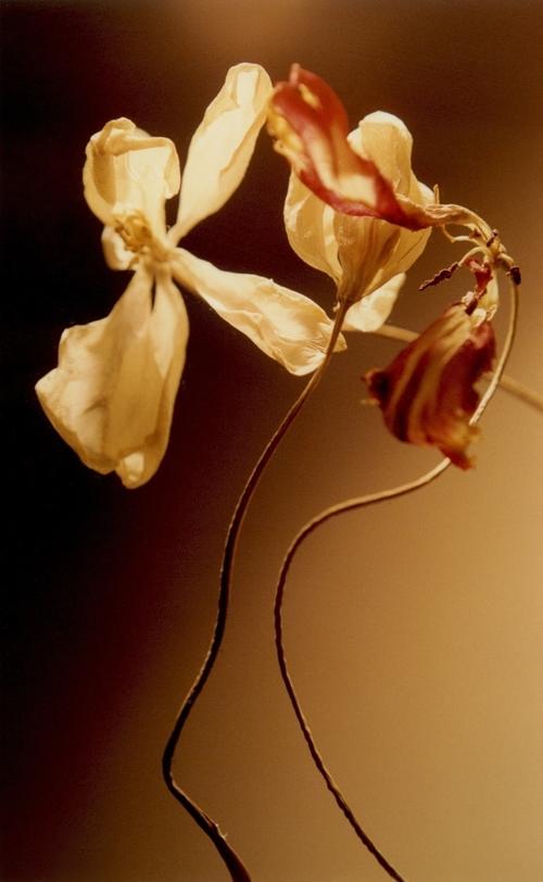Two+flowers.jpg