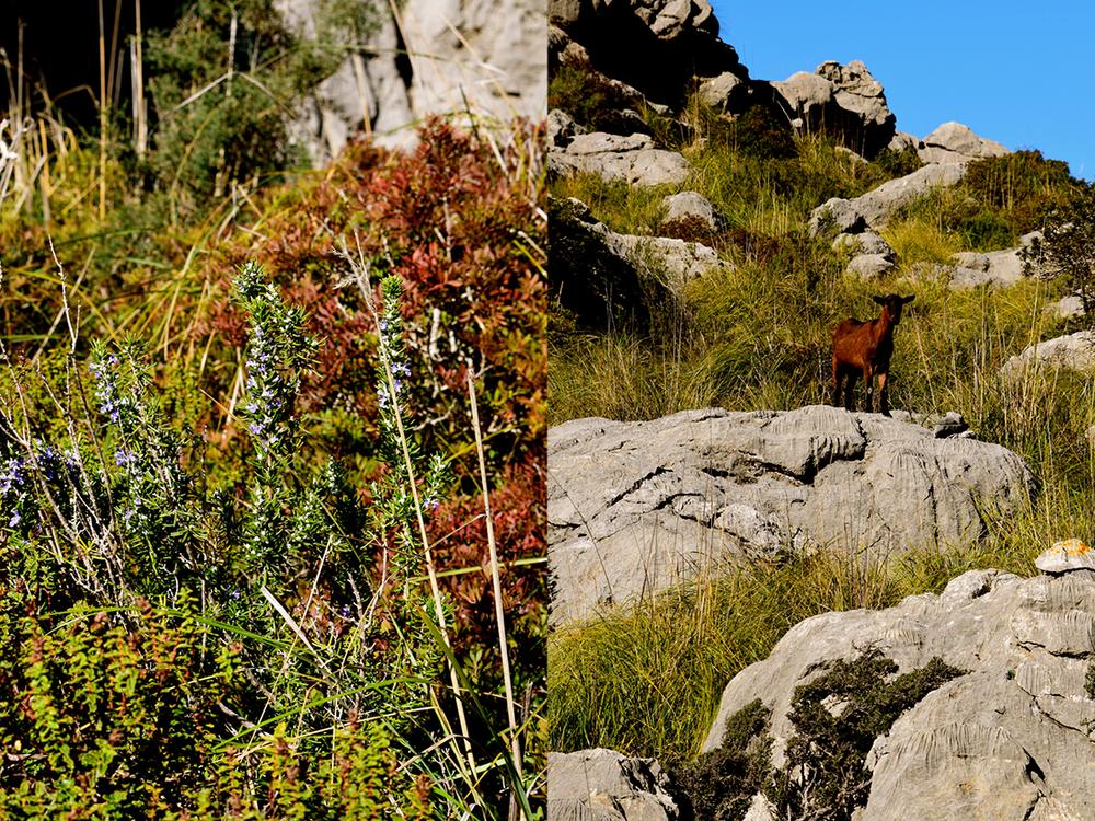 hikingpalma
