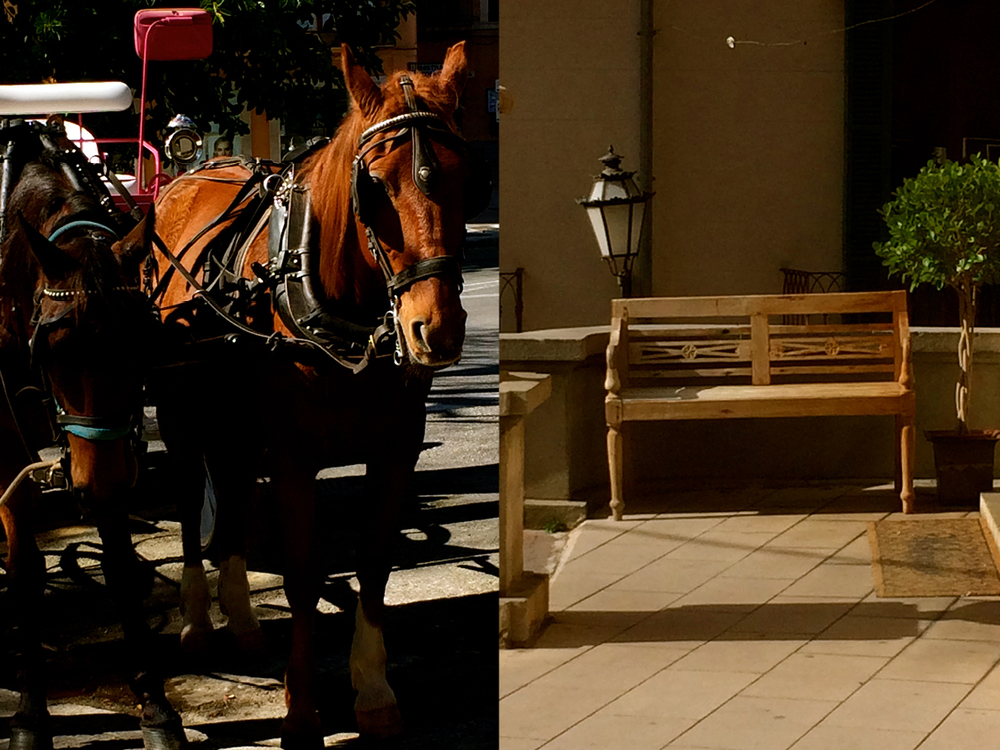 horsespalma
