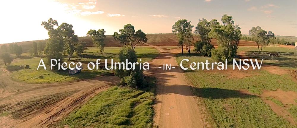 UMBRIA Olive Oil Skin Care Australia.jpg