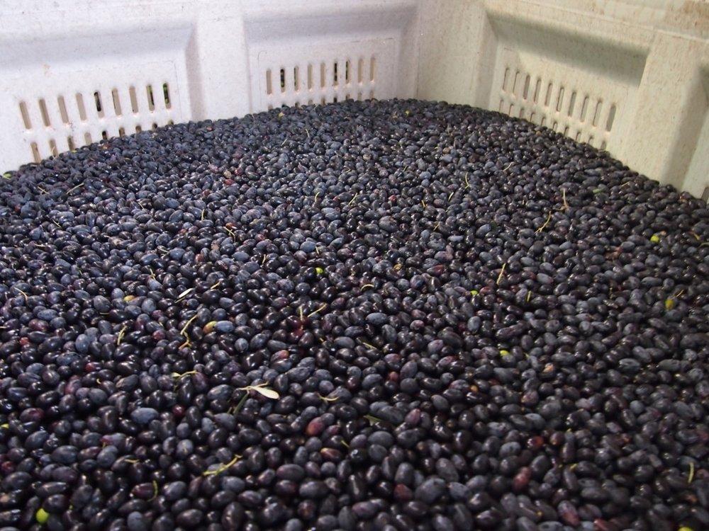 black olives.jpg