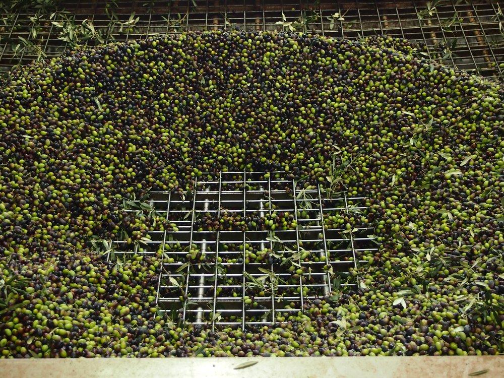 green olives.jpg