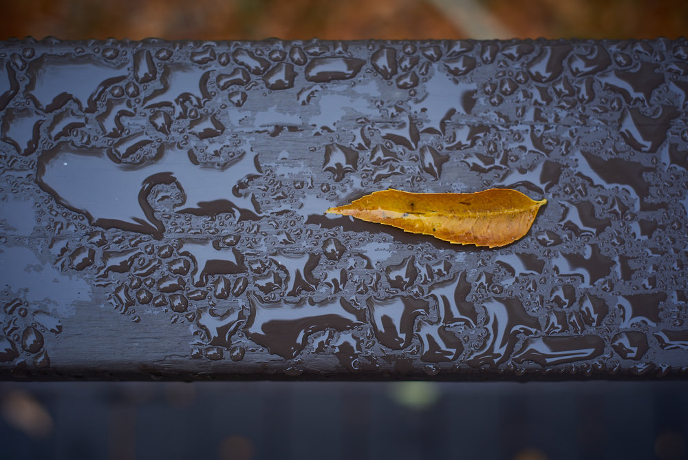 leaf on the rail