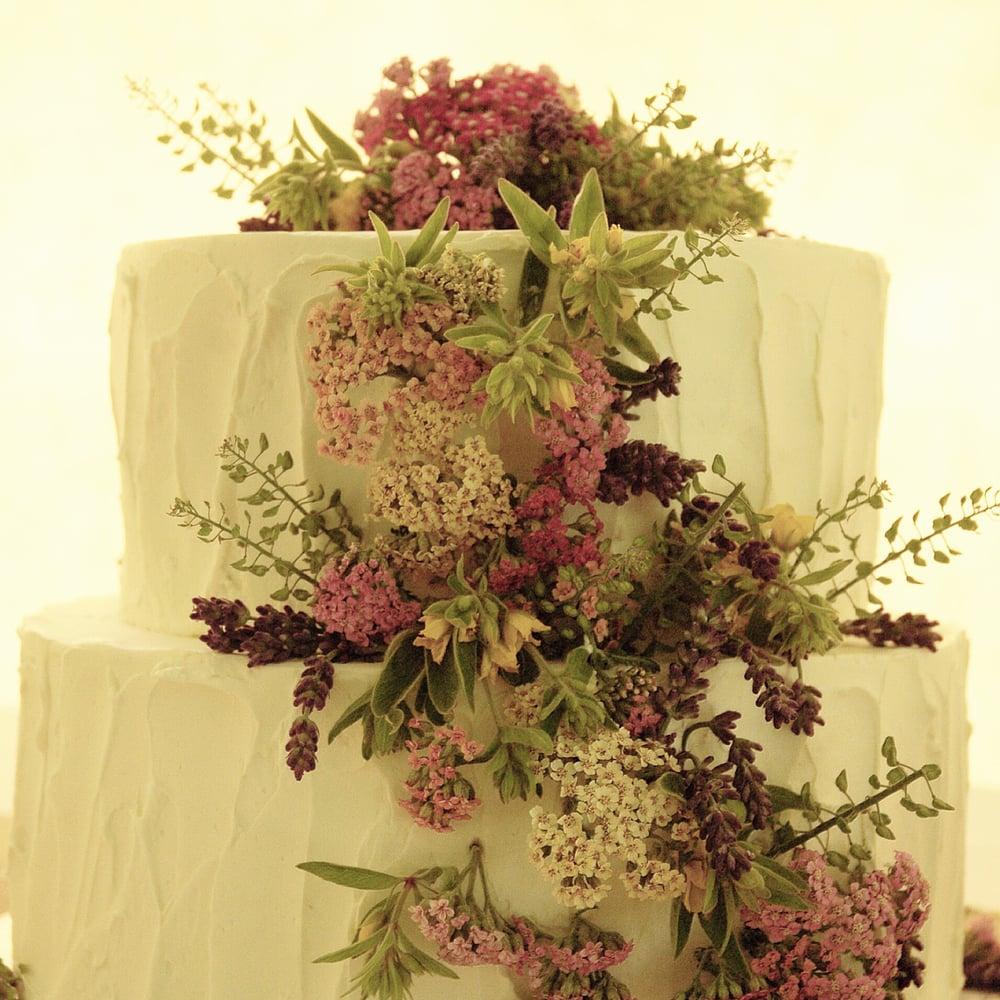 Aviary cake photo.jpg19.jpg