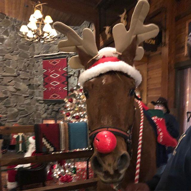 A #reindeer.