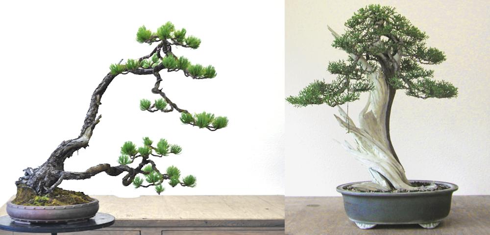 mirai bonsai 2.jpg