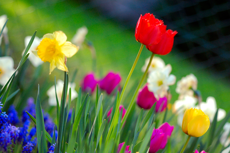 Colorful-Spring-Garden---Wikipedia-Commons.jpg