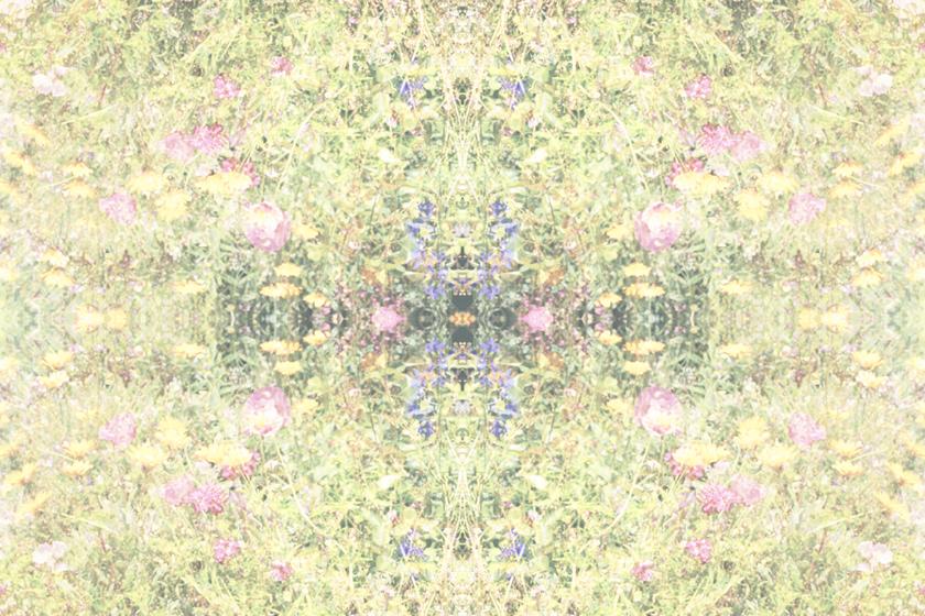 Wildflowers alt.jpg