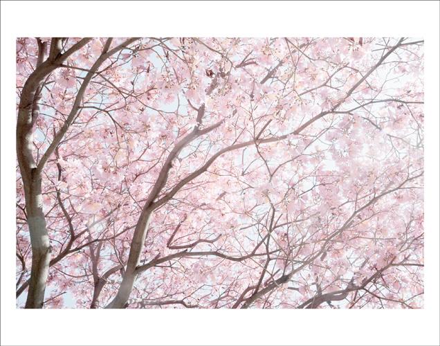 cherry-cherry-mural.jpg