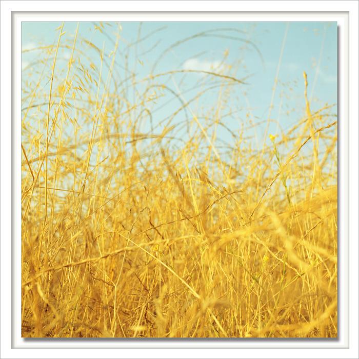 Cornfields.jpg