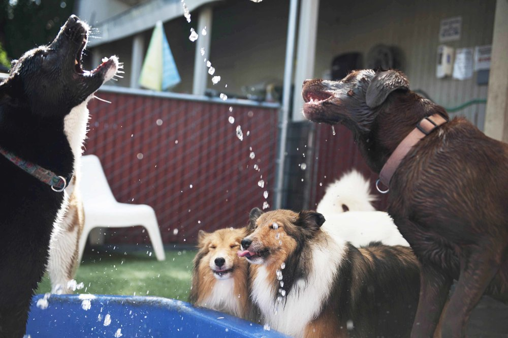 dog daycare cage free grateful dog.jpg