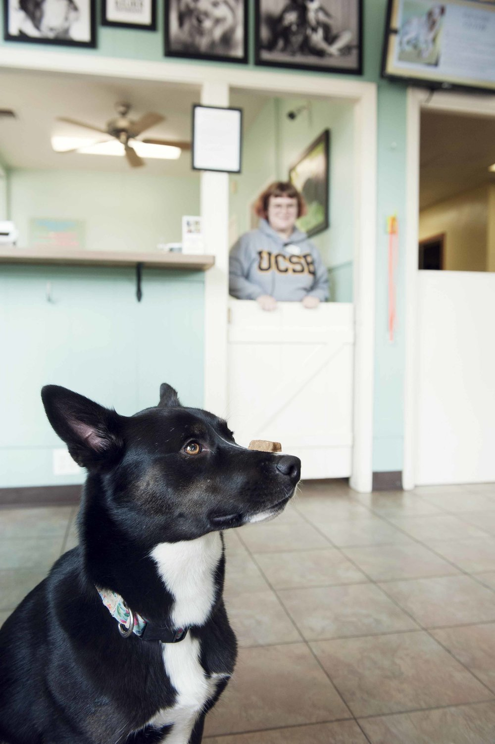 dog photographer grateful dog daycare.jpg
