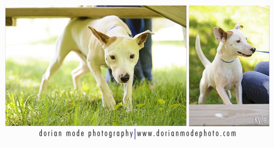 companion pet rescue_Kyle