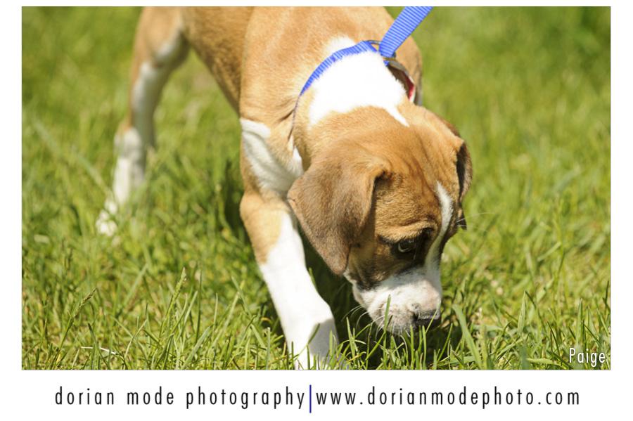 companion pet rescue_paige