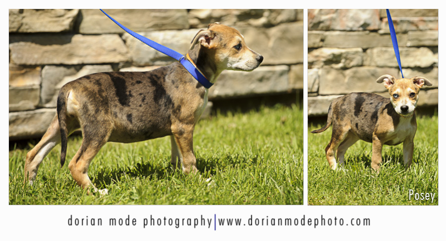 Posey was adopted at the open house on Sunday. Hooray!!!
