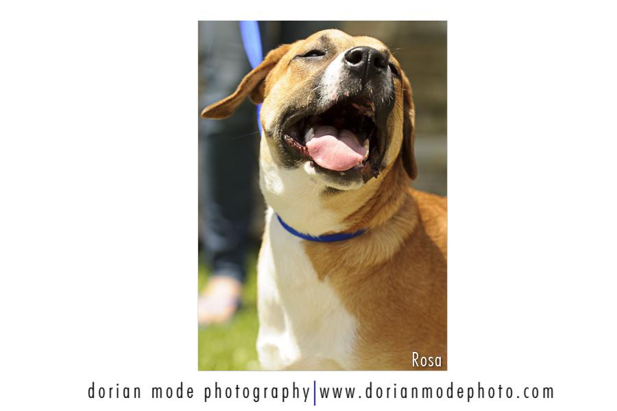companion pet rescue_rosa