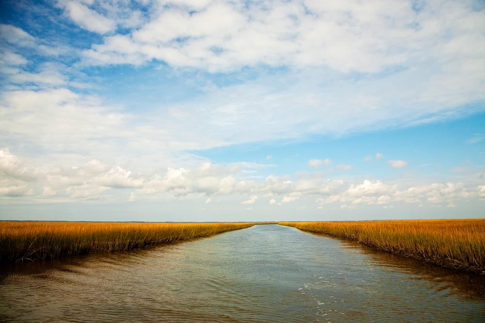_eastern-shore-3768.jpg